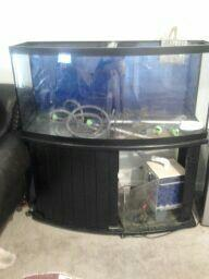 72 Gallon Bowfront fish tank/w Stand - (Lakeland, FL) for Sale in Lakeland, Florida Classified ...