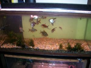 75 G GALLON FRESHWATER FISH TANK AQUARIUM WITH