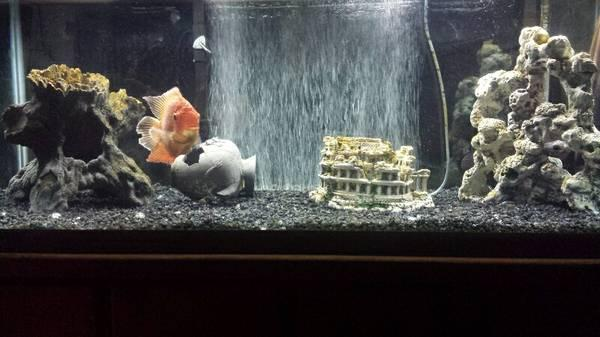 75 Gallon Fish Tank and Stand w e - $350