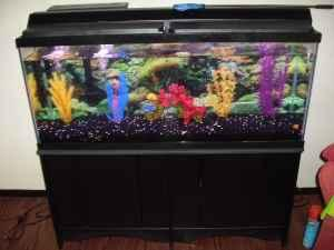 Gallon Fish Tank on 75 Gallon Fish Tank    350  Owensboro  Ky  For Sale In Evansville