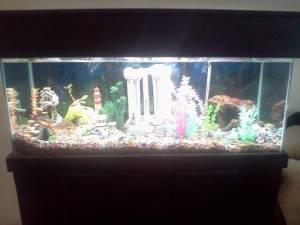 90 gallon aquarium for sale all accessories and fish for 90 gallon fish tank for sale