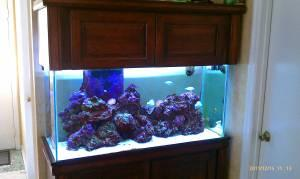 Fish tank maintenance 90 gallon sale 2017 fish tank for 90 gallon fish tank for sale
