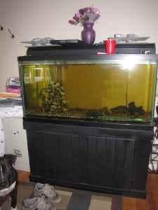 Fish tanks for sale in ct 90 gallon fish tank for for 90 gallon fish tank stand