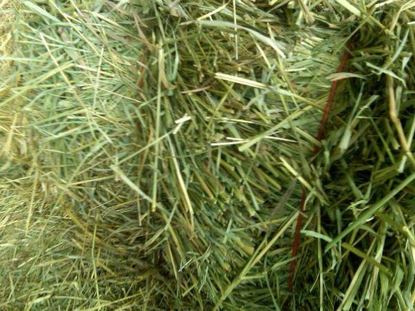 95 to 110 lb hay! Grass alfalfa mix first cutting barn