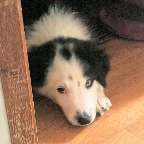 Pets And Animals For Sale In Carthage North Carolina Puppy And