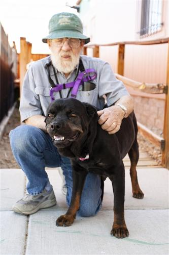Acacia Rottweiler Adult Adoption Rescue For Sale In Albuquerque