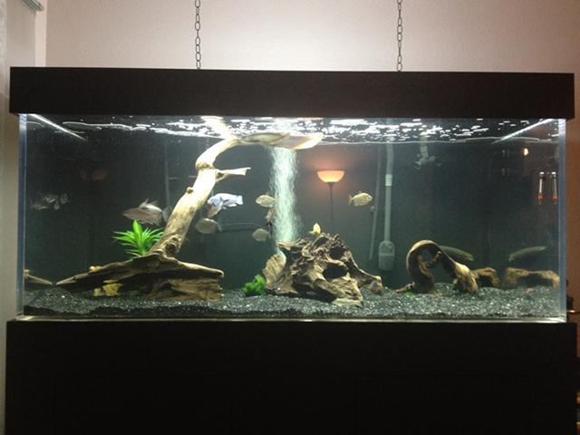 Aquarium Phoenix Classifieds