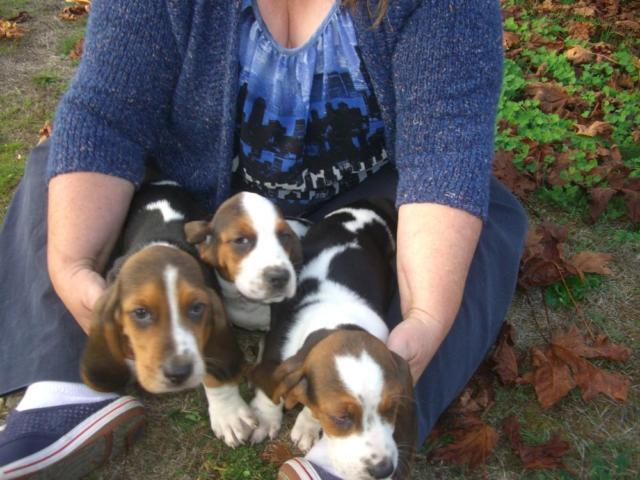 Dogs in Olympia Washington - Puppies and Dogs for Sale