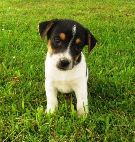 Pets And Animals For Sale In Mount Pleasant Iowa Puppy And Kitten