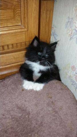 kitten eyes matted shut