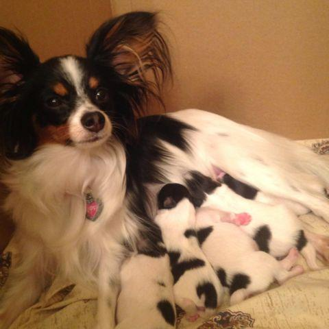 Pets And Animals For Sale In Suffolk Virginia Puppy And Kitten