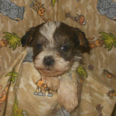 6301 Lake Pointe Way Sweet Home OR 97345 M19513 42654 besides Outdoor Recreation furthermore The Knight Group Homes besides ing Soon besides Akc Staffordshire Bull Terrier Female Needs Home8 Weeks Old 31911939. on sweet home oregon real estate