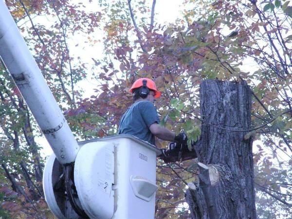 Affordable Tree Service: Free Estimates