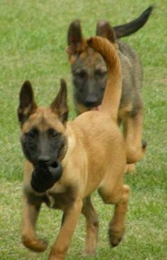 Dog Kennels Raleigh Nc