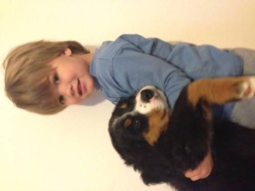 AKC Bernese Mountain Dog Puppies RARE 8 weeks old