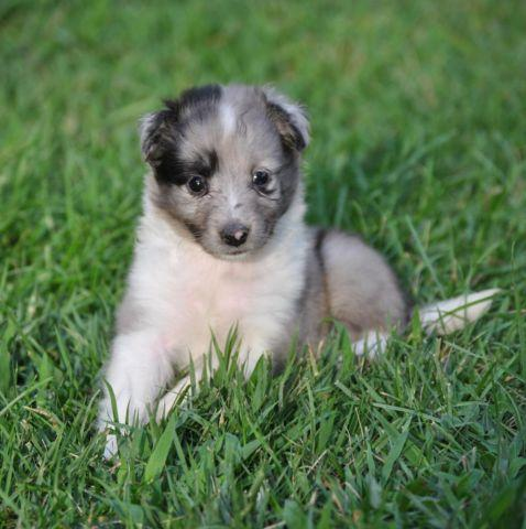 Pets And Animals For Sale In Lookout Mountain Georgia Puppy And
