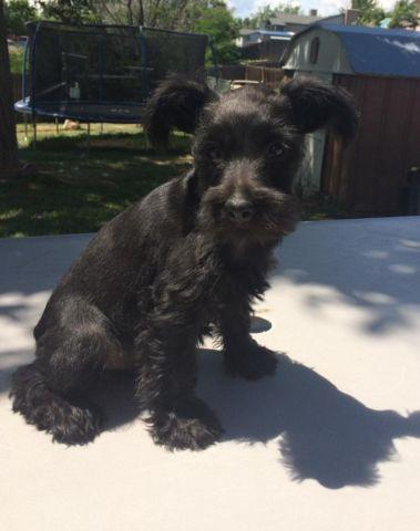 Pets And Animals For Sale In Lone Tree Colorado Puppy And Kitten