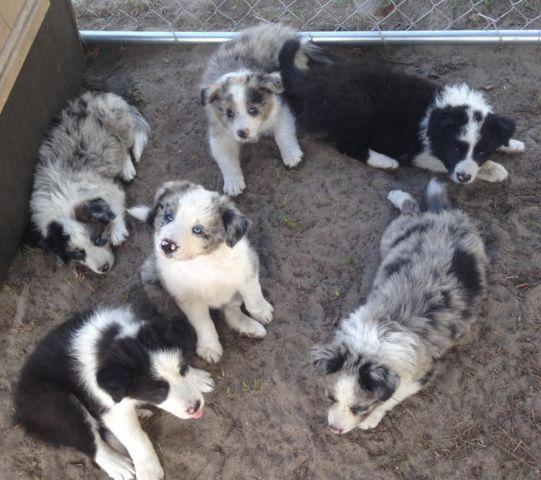 Pets And Animals For Sale In Glennville Georgia