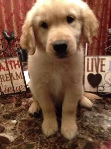 Pets And Animals For Sale In Monticello Florida Puppy And Kitten