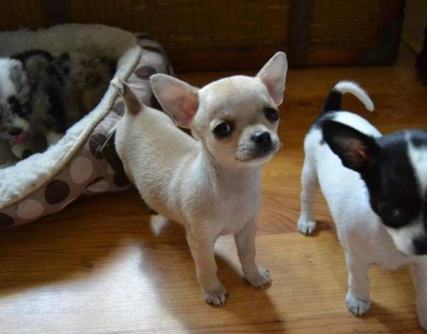Pets And Animals For Sale In Adams Minnesota Puppy And Kitten