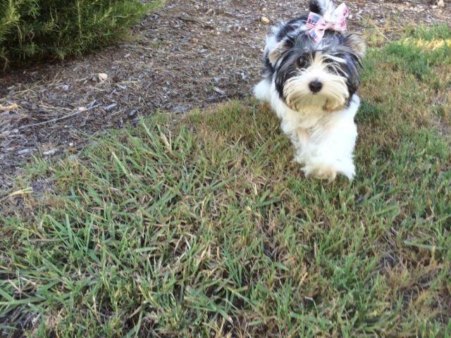 Craigslist - Animals and Pets in San Antonio, TX - Claz.org