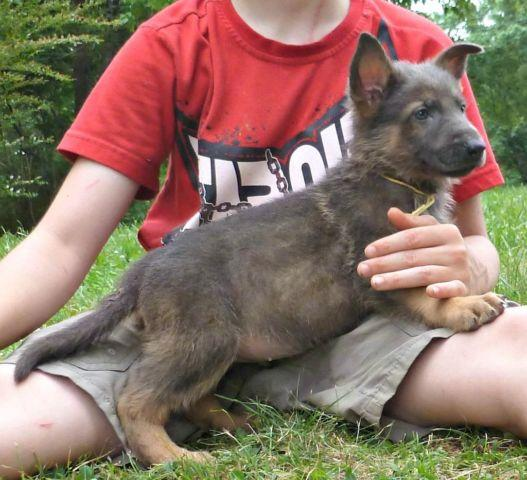 pets and animals for sale in pegram tennessee puppy and kitten