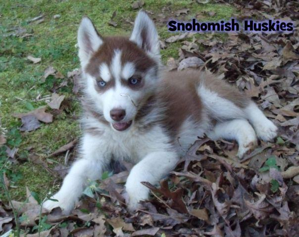 Pets And Animals For Sale In Angier North Carolina Puppy And