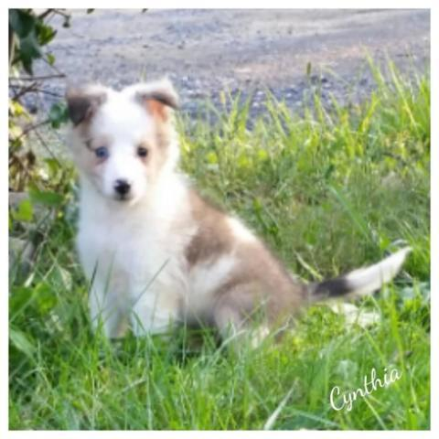 Cumberland Md Dogs For Sale