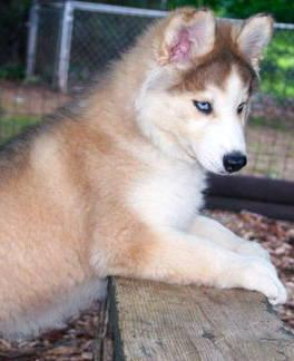 Pets And Animals For Sale In Ridgway Colorado Puppy And Kitten