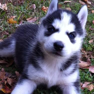 Puppy Stuff For Sale I...