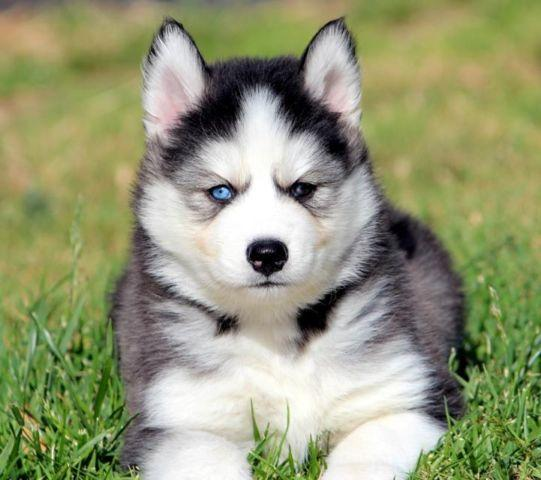 Image result for pic husky boy