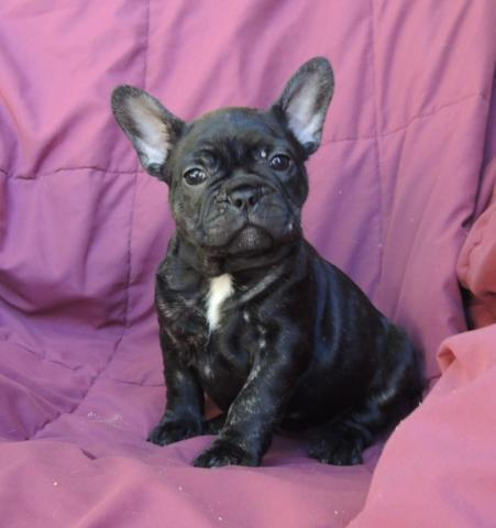 Pets And Animals For Sale In Burleson Texas Puppy And Kitten