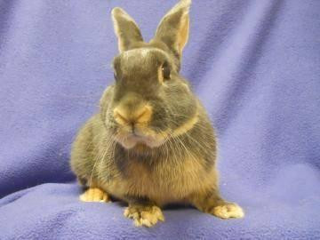 General information on rabbits and rabbit care