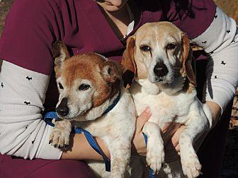 Annie and Franny in TN Beagle Senior Female