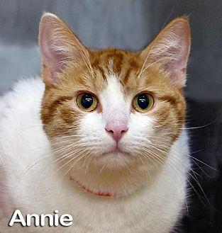 Annie Domestic Mediumhair Adult Female
