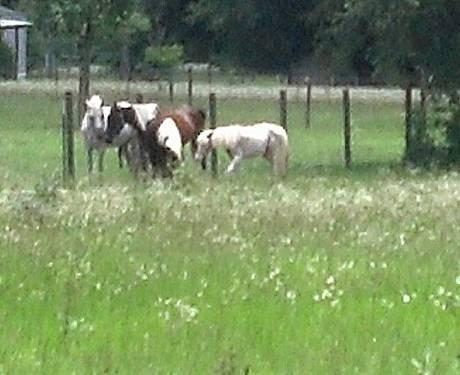 APHA Mare Trail / Playdays