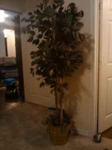 **ARTIFICIAL TREE** - $10 (GEORGETOWN)