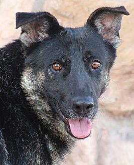 Ashley von Aland German Shepherd Dog Young Female