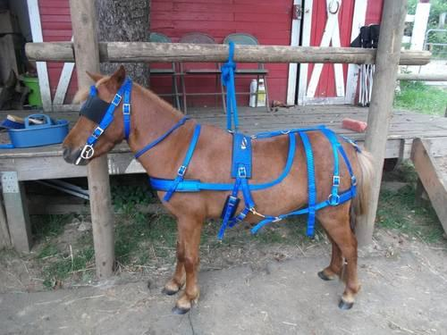 Awesome Mini Horse - Great All Around Working Horse - 3