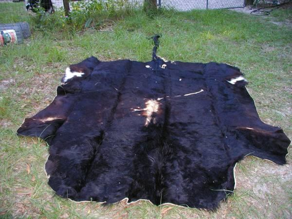 Awesome Scottish Highlander Rug/hide! - $400