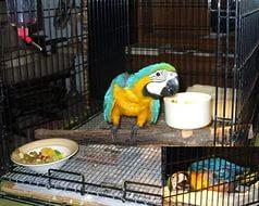 Baby Macaws and Grown Macaws For Sale (304) 451-0467