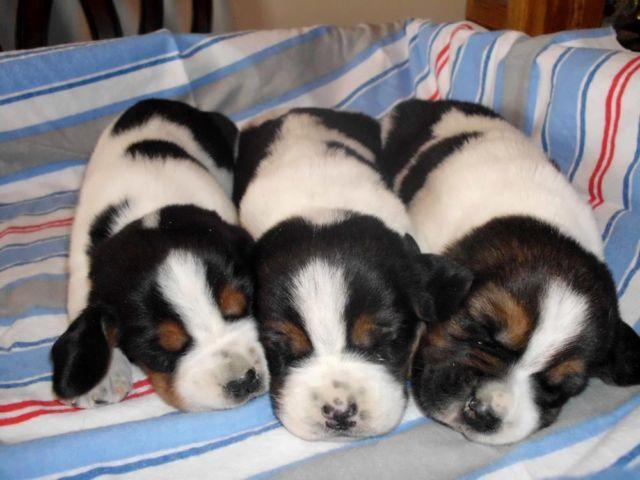 Pets And Animals For Sale In Black Creek Wisconsin Puppy And