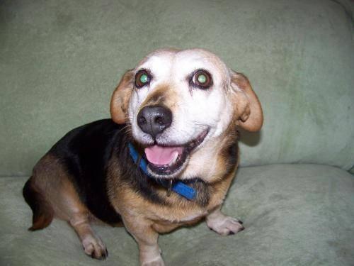 Dog Pound Monterey Park Ca