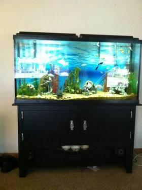 Beautiful 55 gallon fish tank with modern black stand for for 55 gallon fish tank stand
