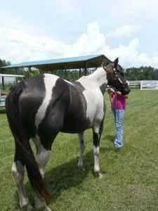 Beautiful barrel/roping horse - $1500 (mobile)
