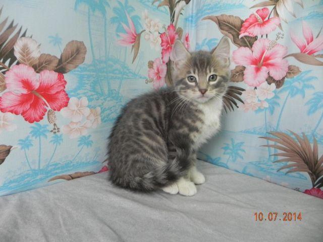 cheetoh cat rescue