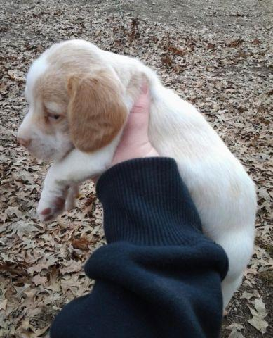 Pets And Animals For Sale In Carrier Mills Illinois Puppy And