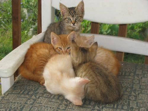 kitten rescue mason county