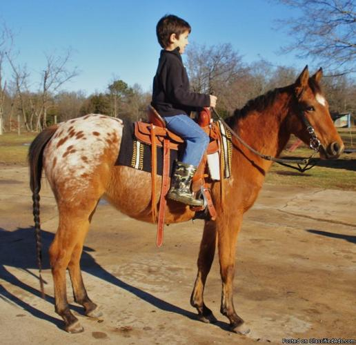 Beginner SAFE KID PONIES Capable of Making all your LITTLE ONES horse  related dreams come true!!!