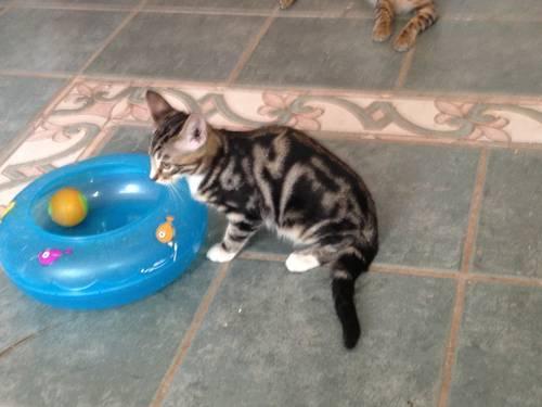 spray paint cat litter box